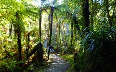 Neuseeländischer Regenwald