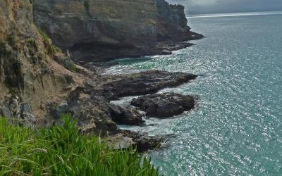 Albatross-Küste