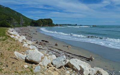 Küste mit Treibholz