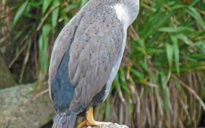 Fauna im Abel Tasman Nationalpark