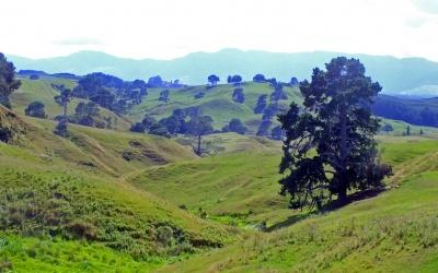 Landschaft rund um Hobbingen / Matamata